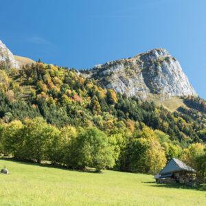 Bois Qualité Savoie Forêt Bois